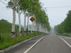 白樺の並木道<br /> height=