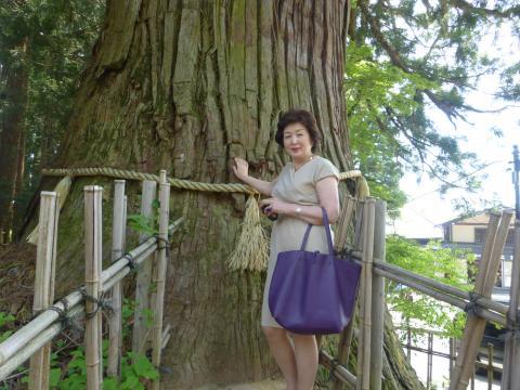 戸隠神社の3本杉